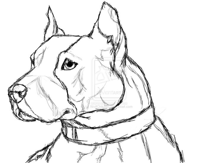 Blue Pitbull Coloring Pages