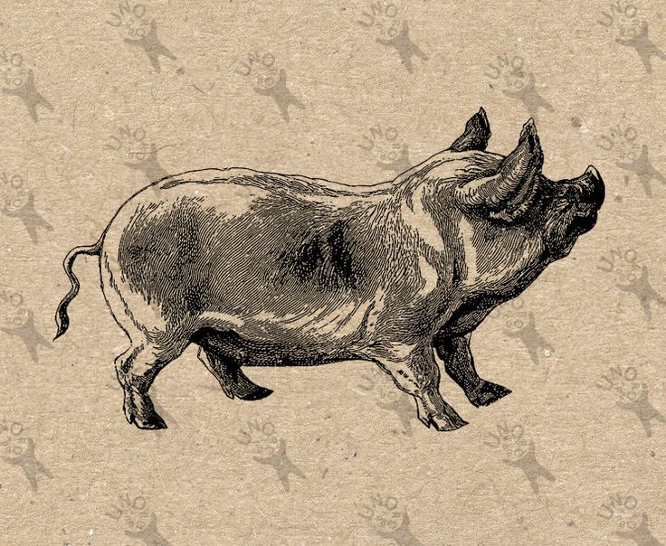 Vintage Hog Pig Instant Download picture Digital printable retro clipart graphic -stickers, decor, prints, fabric transfer etc HQ 300dpi by UnoPrint on Etsy