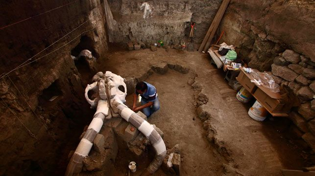 Mexican experts are carefully digging up fossils of a Pleistocene-era mammoth believed to have been cut to pieces by ancient humans.
