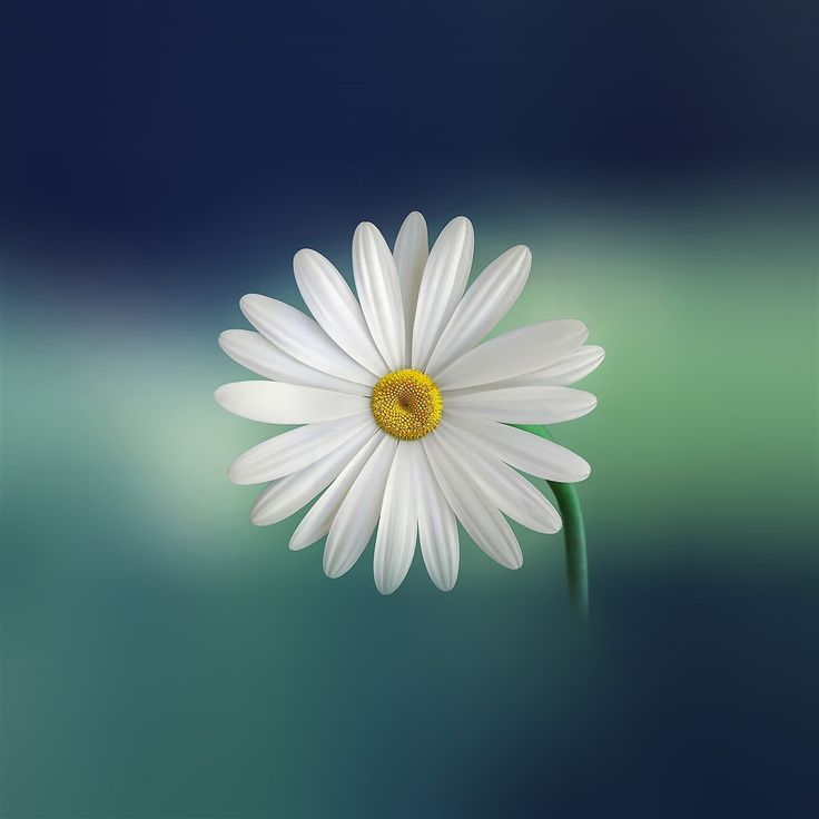 Flower Blue Green Nature #Retina #iPad #Air #wallpaper