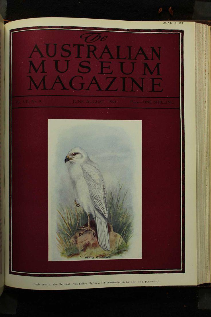 Australian-Museum-Magazine. The White Goshawk. Illustrator: Lilian Medland. http://australianmuseum.net.au/Australian-Museum-Magazine-1921-1942/