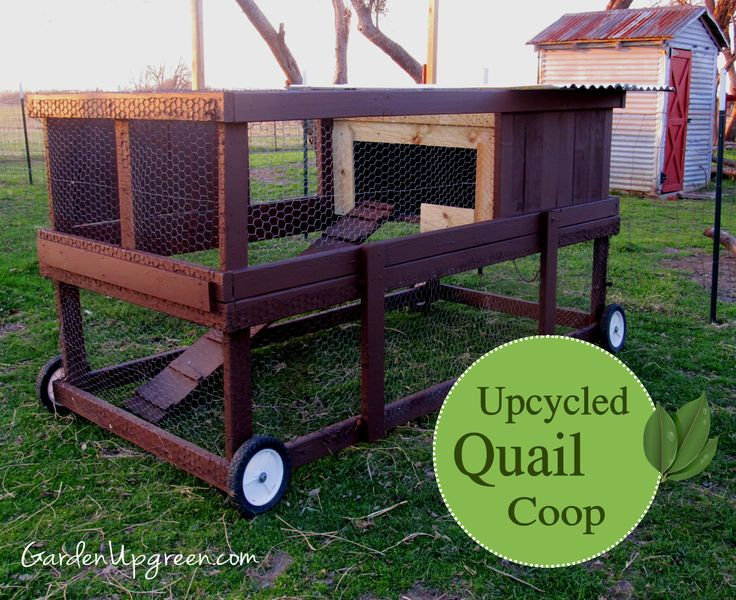 Backyard Quail Production : Upcycled Quail Coop  check it out! GardenUp green you never know