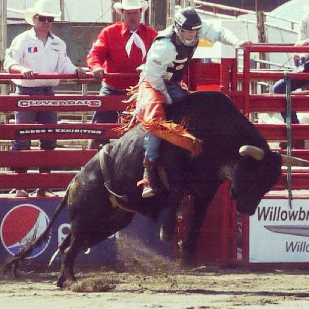 Have you ever experienced a real rodeo? If you can, check out the Cloverdale Rodeo!