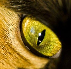 Cat eye problems