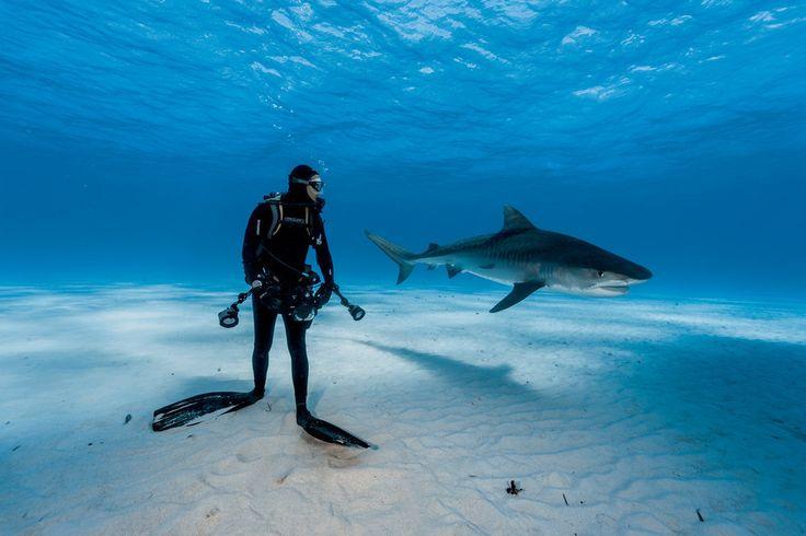 We zijn als de dood voor haaien, en niet zonder reden. Hoewel aanvallen zeldzaam zijn, werden in 2015 liefst 98 mensen door een haai gegrepen, van wie zes het niet konden na vertellen.