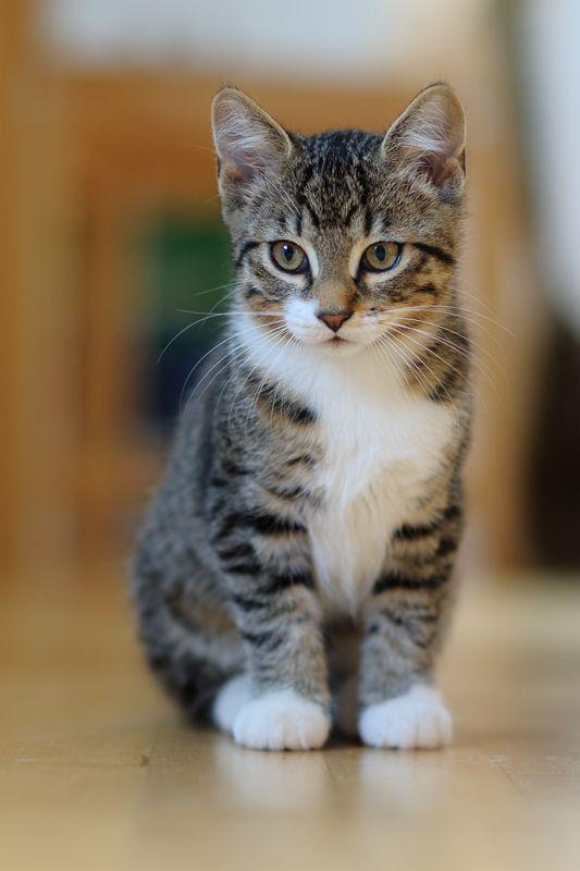 Un precioso gato.