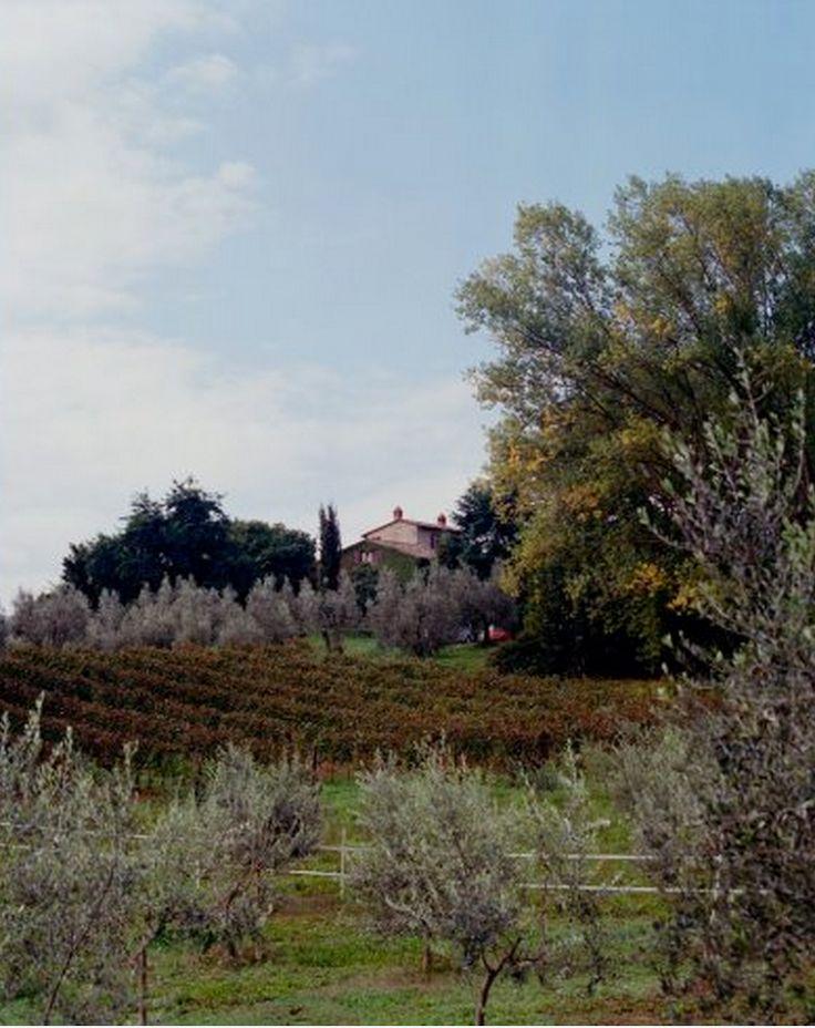 Poggio Etrusco, photo by Andrea Wyner.