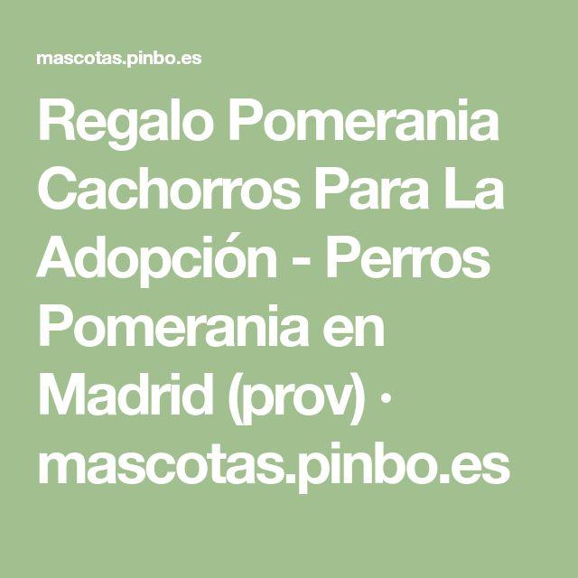 Regalo Pomerania Cachorros Para La Adopción - Perros Pomerania en Madrid (prov) · mascotas.pinbo.es