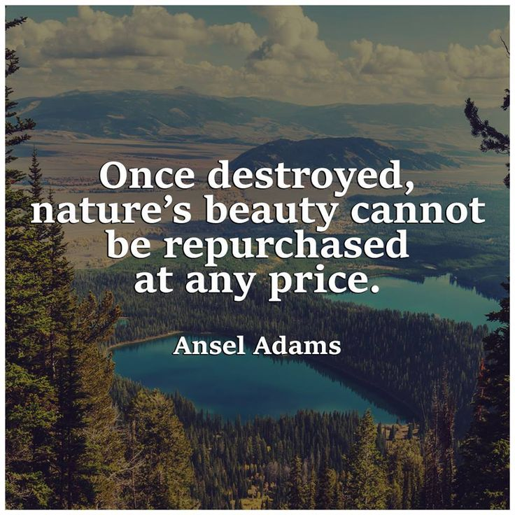 once destroyed, nature's beauty cannot be repurchased at any price.