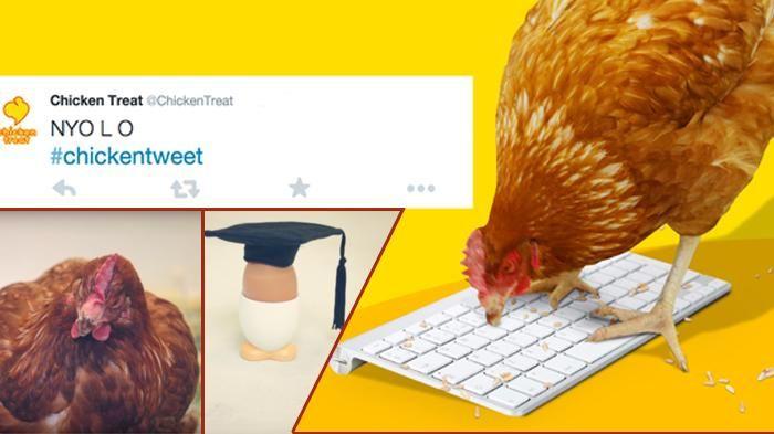 Ini yang Terjadi Jika Ayam Jadi Admin Media Sosial Restoran, Kicauannya di…