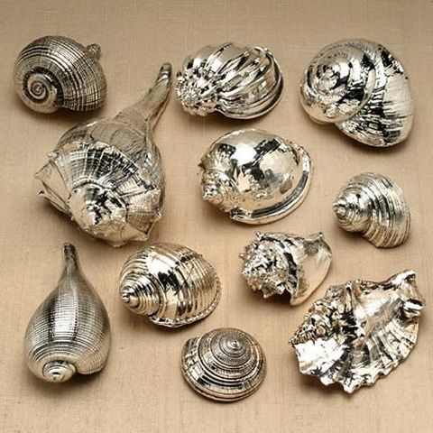 silver sea shells with paint | Spray Paint Sea Shells Silver | Make it