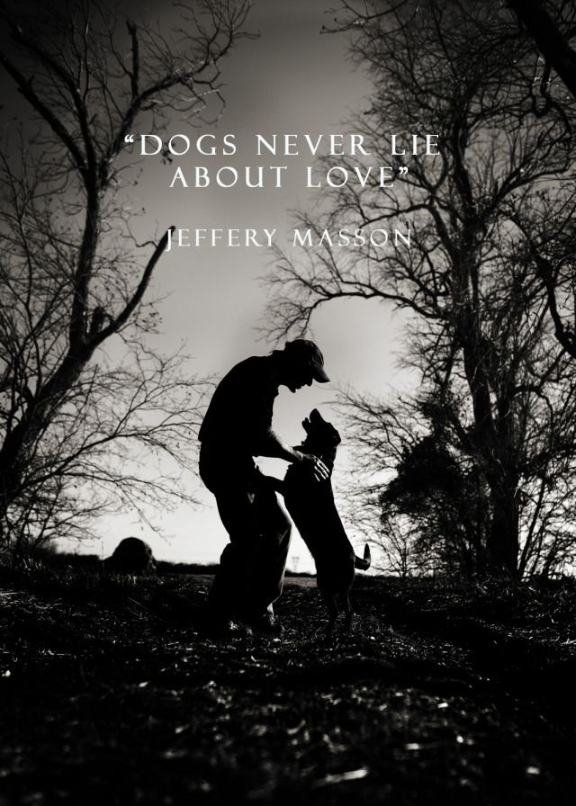Dogs never lie about love....perfect quote for above dog bed,toys or bowl