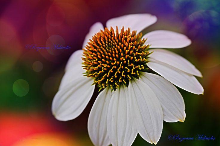 https://flic.kr/p/vWkhcN   White Swan flower!!!   At Eden Garden.Sydney