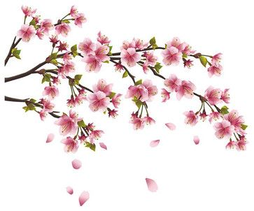 Cherry Blossom Branch Wall Decal - asian - Wall Decals - The Wall Decal Shop - K & L Wall-Art LLC