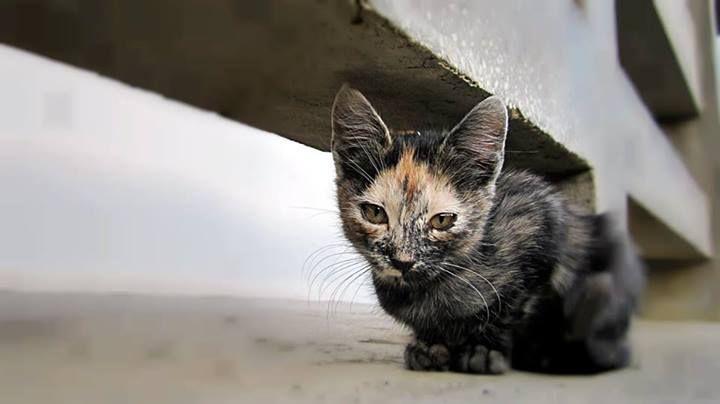 """""""Și zici că pui poza asta cu mine pe o pagină de pisici? Mie ce-mi iese în afară de like-uri?"""""""
