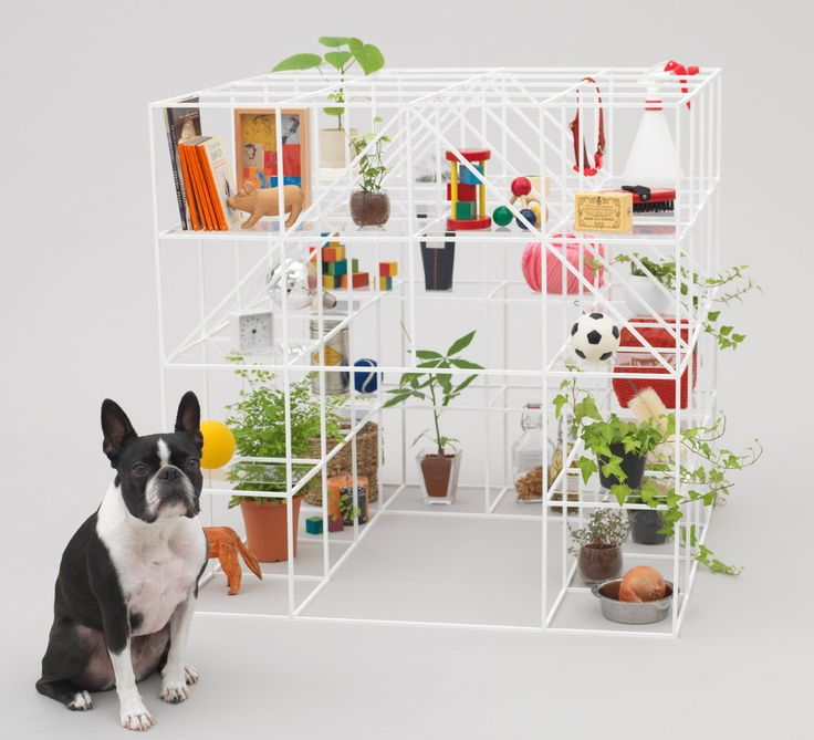 SOU FUJIMOTO'S DOGHOUSE ( http://architecturefordogs.com/exhibition/ )
