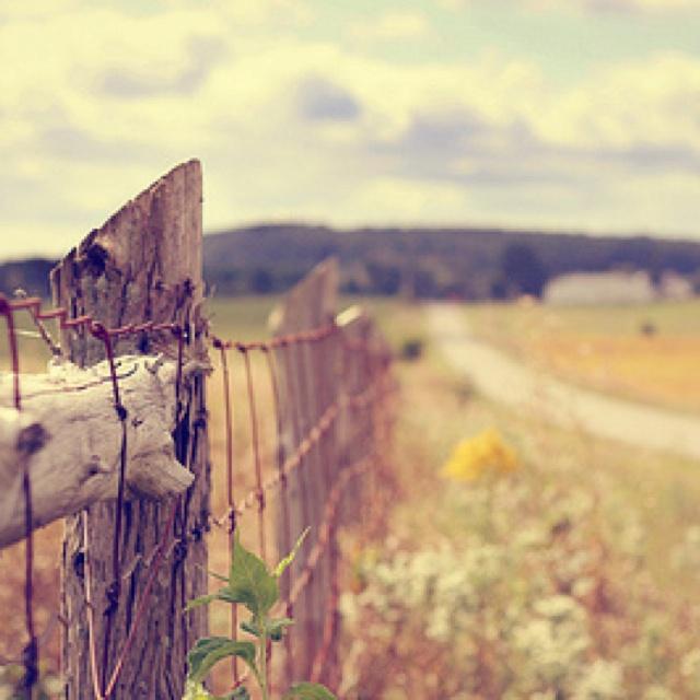 the beauty of a fence row
