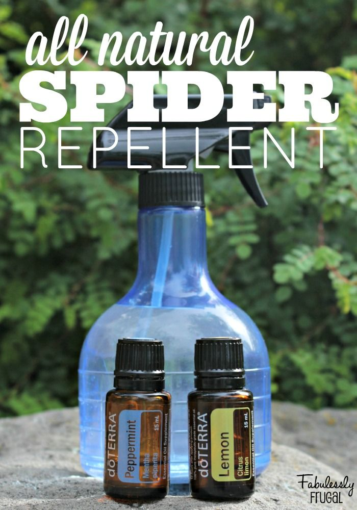 Spider Repellent!  Have wanted this a Long Time since I'm deathly afraid of all spiders!  Easy recipe!