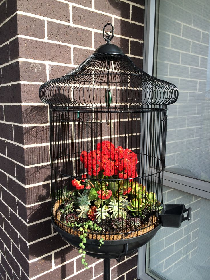 Succulent plants My recycled bird cage. Weekend project. Super happy with the end result :))