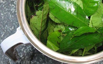 cách làm bột trà xanh tại nhà 8  #bột_trà_xanh #trà_xanh   #blogbeemart #beemart