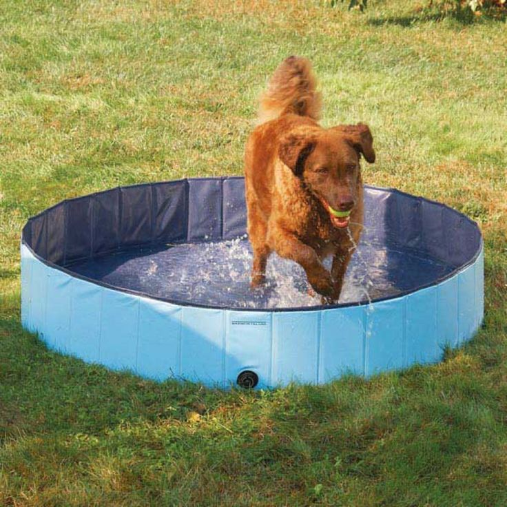 8 Backyard Ideas To Delight Your Dog: Best 25+ Dog Swimming Pools Ideas On Pinterest