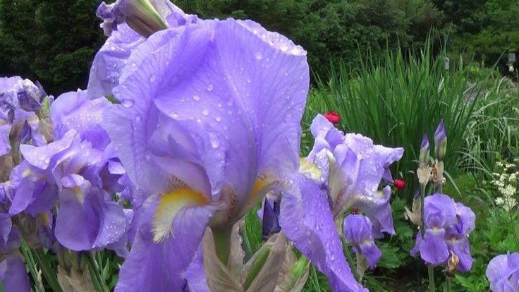 Ploaie de mai în Grădina Botanică