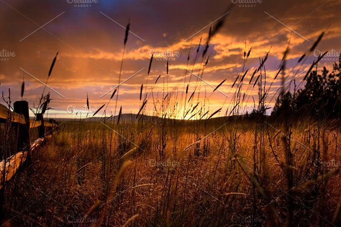 Dark Sunset in Field by LOU&MARKS on @creativemarket