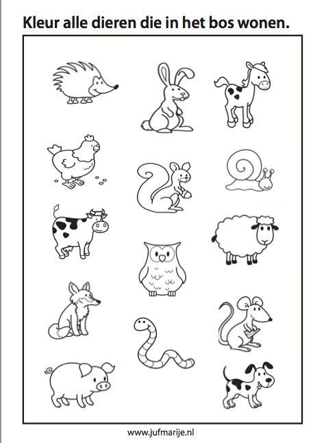 Dieren  in het  bos, animals  of the forest