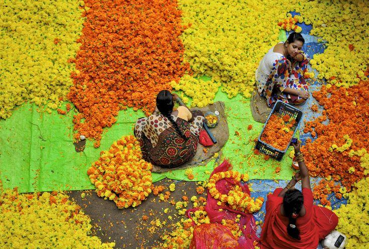 Hindistan, açık hava çiçek pazarlarıyla dünyanın en renkli bölgelerinden biri. Hindu festivallerinde tapınakları ve evleri rengarenk boyamak üzere sıklıkla tercih edilen çiçekler; tüccar perakendeci, dekoratör ve çiçekseverleri bu pazarlarda bir araya getiriyor. Fotoğrafta, Güney Hindistan'ın Bangolore şehrindeki işçilerin pazar için hazırlıkları görülüyor.