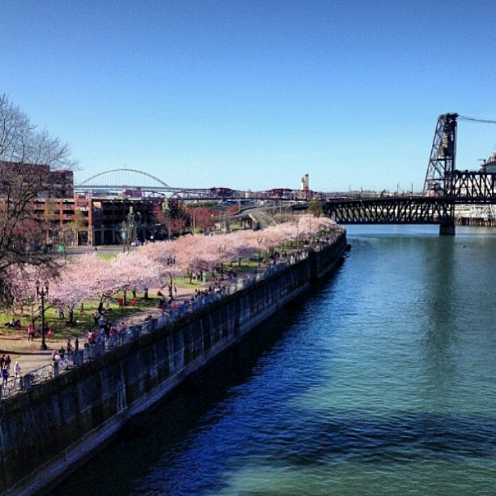 Beautiful Places In Portland Oregon: 33 Best Spring In Oregon Images On Pinterest
