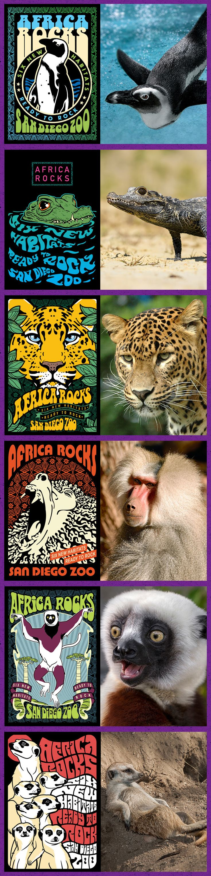 """Conrad Prebys Africa Rocks features an impressive lineup of unusual and  striking species ready for their rise to fame. Take our quiz to see  which of our """"rock stars"""" you identify with and automatically be entered  to win Africa Rocks merchandise and an Inside Look tour for two."""
