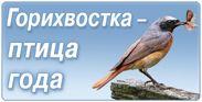 Горихвостка - птица 2015 года
