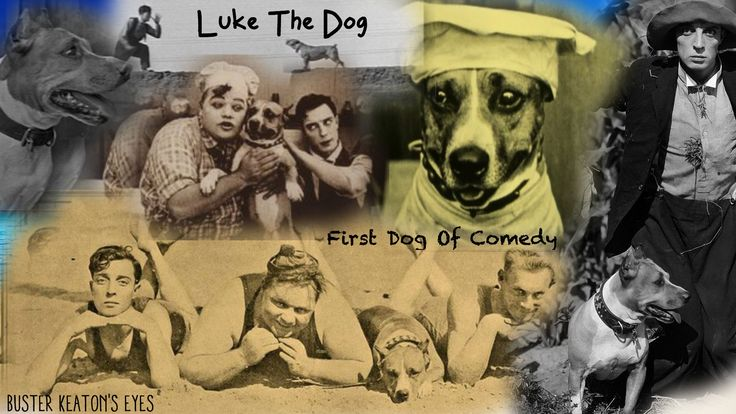 Luke. the first dog of comedy
