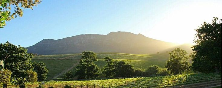 Groot Constantia History | South African Wine Industry | Viticulture