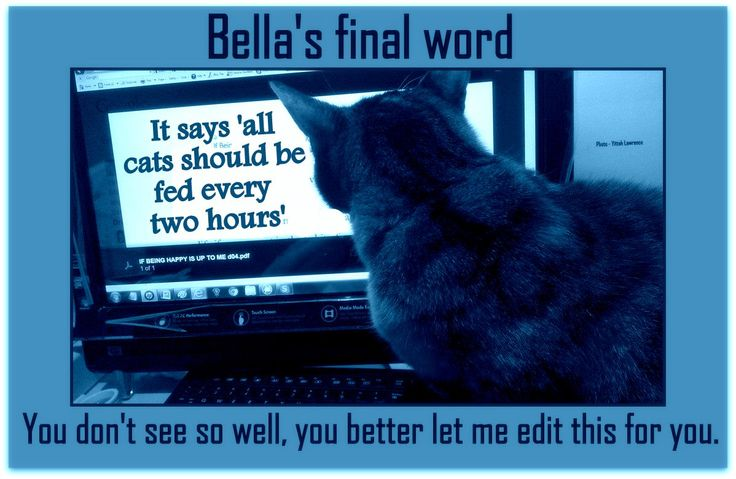 Bella The Beautiful, Cheeky again