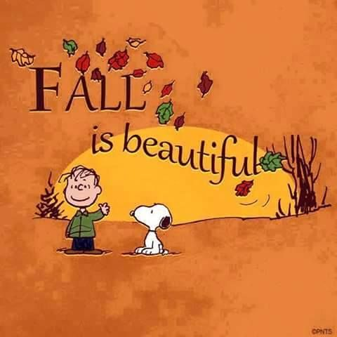 Fall is beautiful!                                                       …