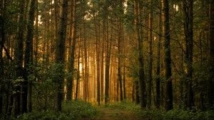 Golden Forest in Nature HD Wallpaper