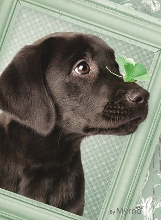 Ravensburger Ravensburger, Пазл «Счастливый щенок» 500 шт