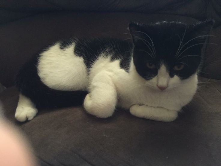 Fat Boy the cat is resting safely at home after a long stretch stranded on top of a 45-foot power pole.