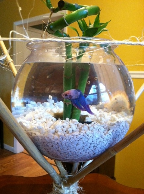 Beta fish centerpiece on a bamboo stand.  Simple, easy-to-create and eye-catching to see.