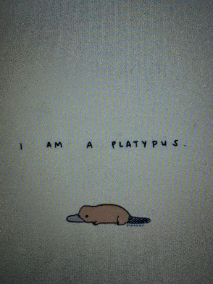 I am a true platypus, on the inside. LOL
