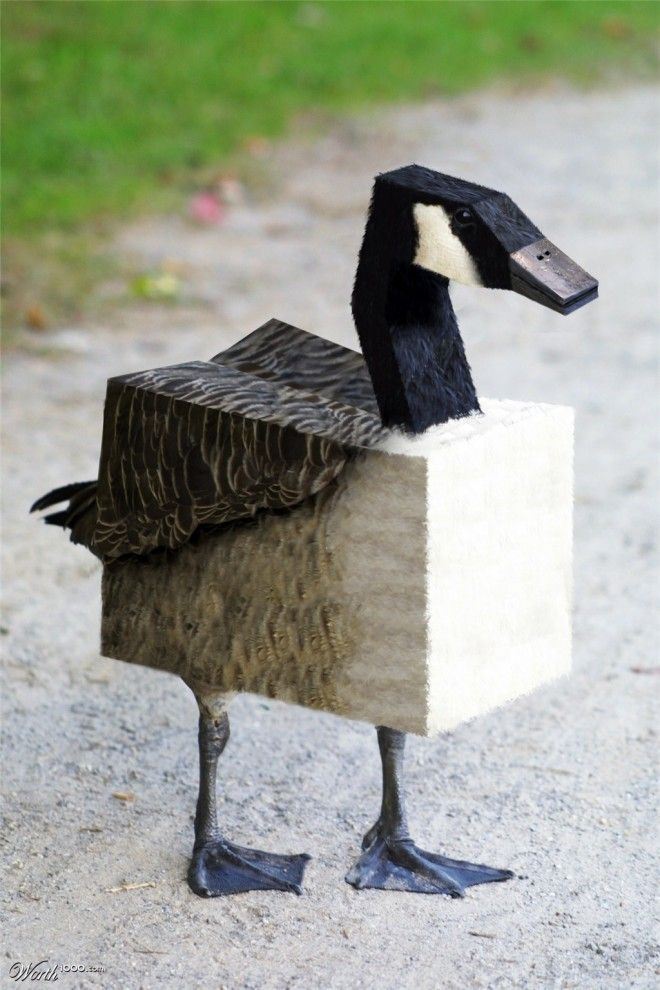 Best WEIRDIES Images On Pinterest Books Creative And Girls - Photoshop gets weird after photographer creates minecraft inspired cubed animals