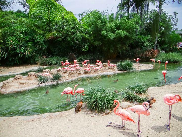 Zoo de San Diego – Un des plus grands zoo au monde !   Further West