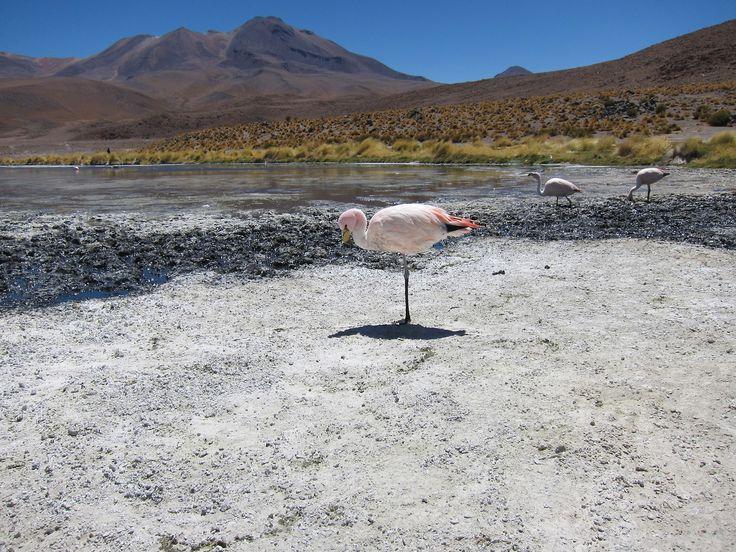 Flamingos – Salar de Uyuni
