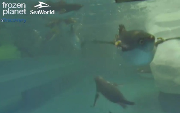 We're swimming on the Penguin Cam! http://dsc.discovery.com/tv/frozen-planet/penguin-cam/