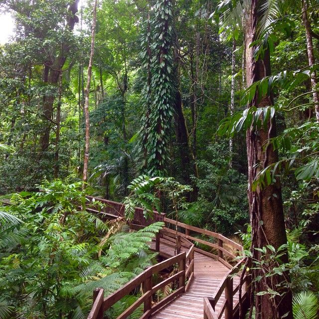 A walk in the Daintree rainforest works wonders for the soul #thisisqueensland photo @fiona_mckinnon_salzer