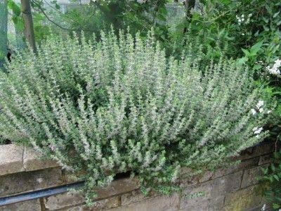 809 best Gardening HerbsWildstuff images on Pinterest Edible