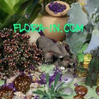 ☘ flora-in.com ☘ Мини-рокарии, флорариумы и т.дヅ
