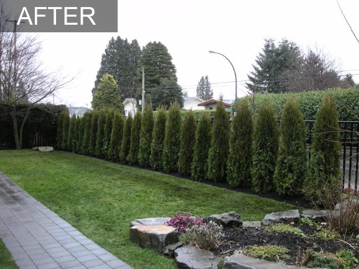 The addition of a new cedar hedge by fabulous flower beds for Corner homes landscaping ideas for privacy