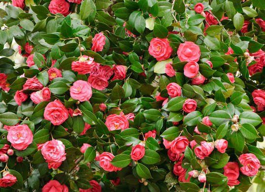 The dreary days of winter become even more bleak if your landscape looks dead, brown, and bare. Cheer up your lawn and garden with these 10 showy shrubs that offer colorful cold-weather curb appeal.